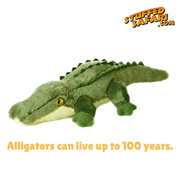 Alligator Animal Fact