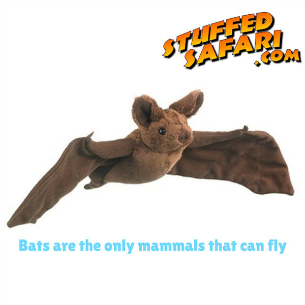Bat Animal Fact