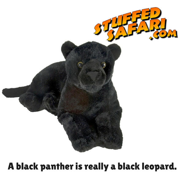 Black Panther Animal Fact