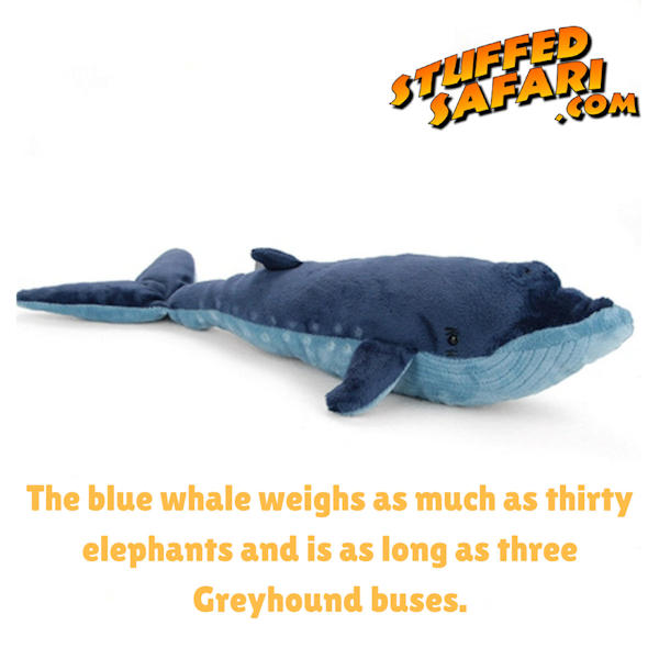 Blue Whale Animal Fact