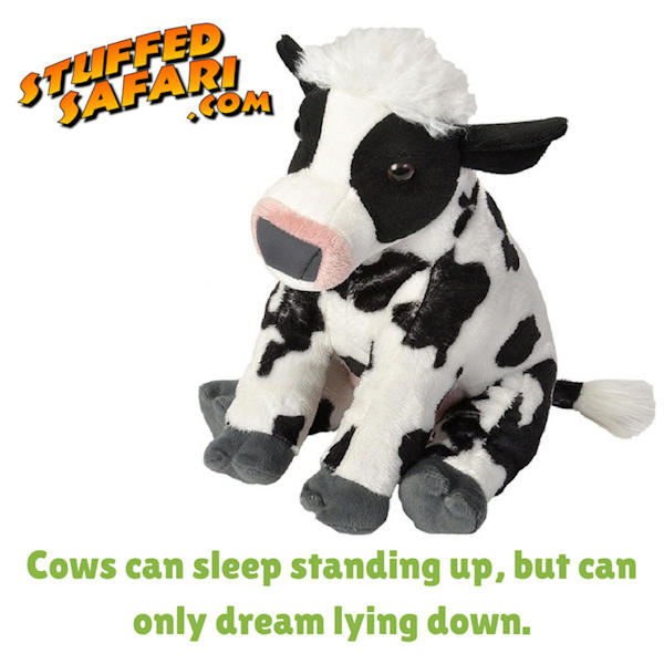 Cow Animal Fact