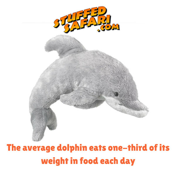 Dolphin Animal Fact