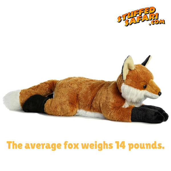 Fox Animal Fact