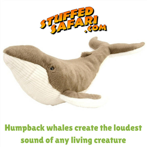Humpback Whale Animal Fact
