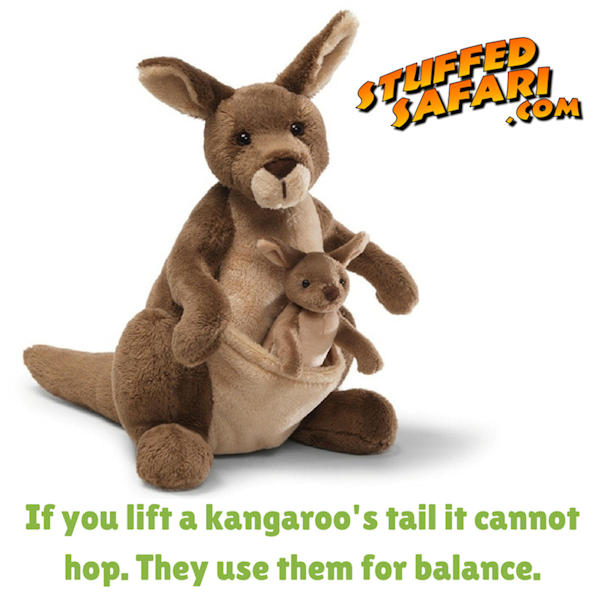 Kangaroo Animal Fact