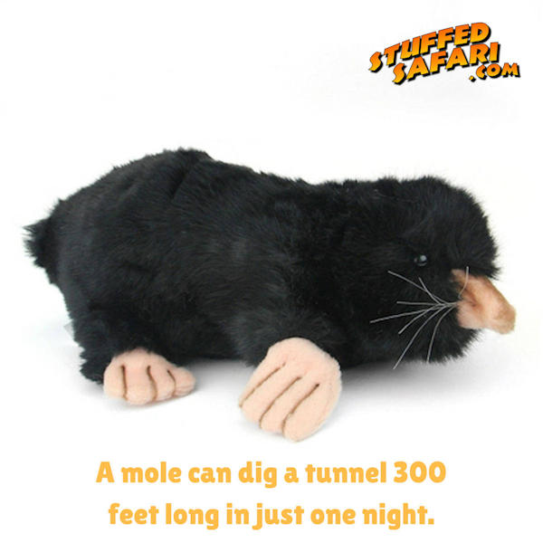 Mole Animal Fact