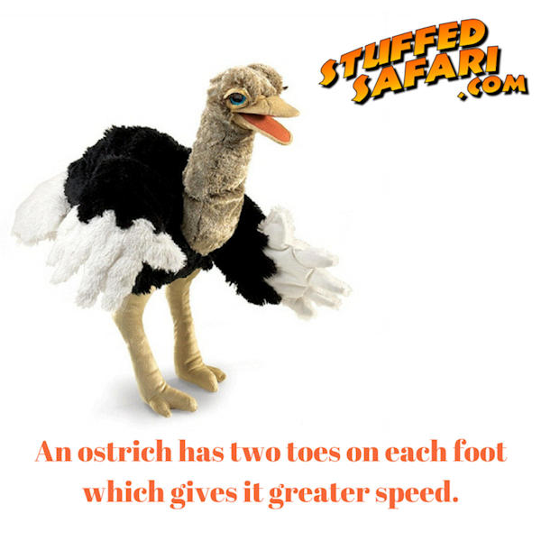 Ostrich Animal Fact