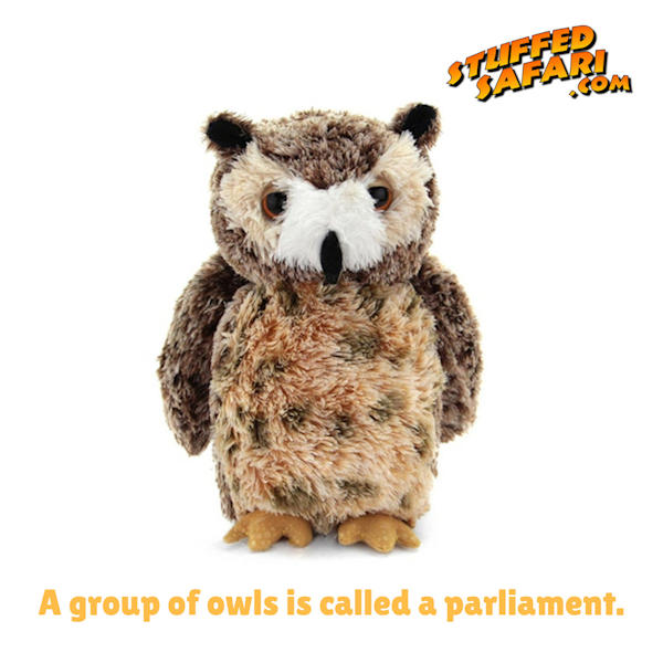 Owl Animal Fact