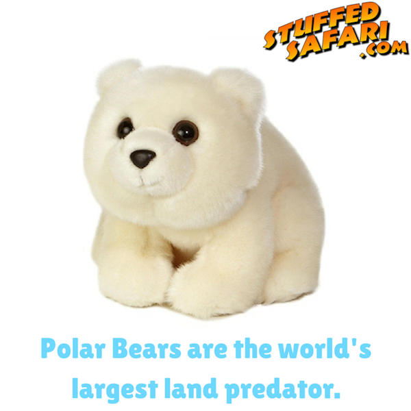 Polar Bear Animal Fact