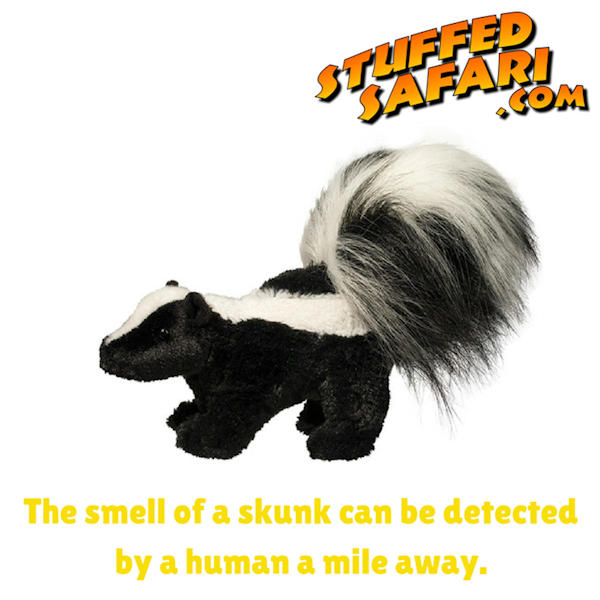 Skunk Animal Fact