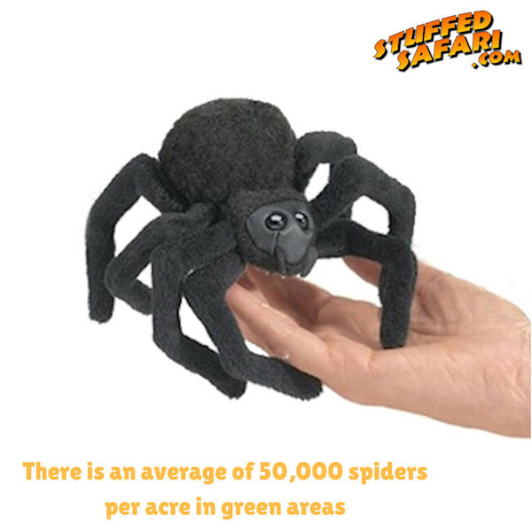 Spider Animal Fact