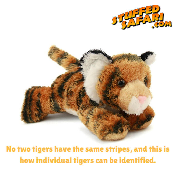 Tiger Animal Fact