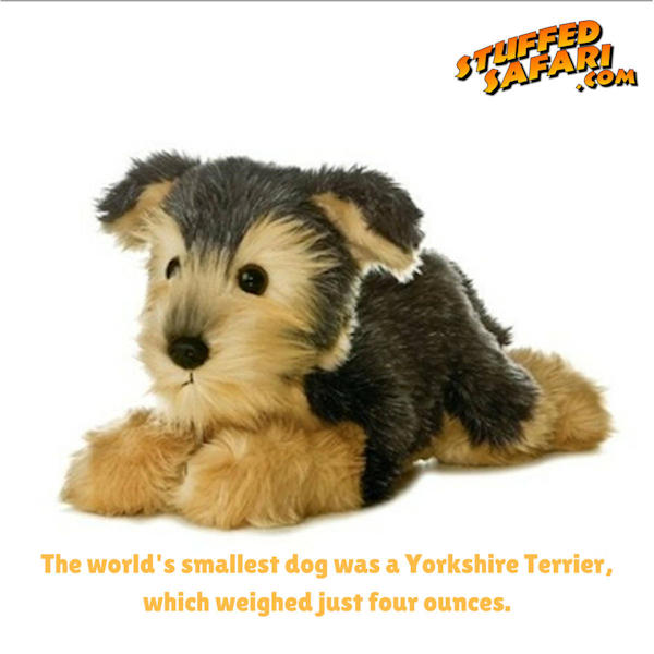 Yorkshire Terrier Animal Fact